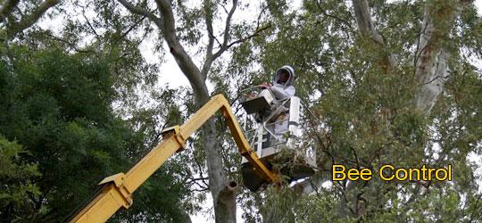 Tree Bee Control