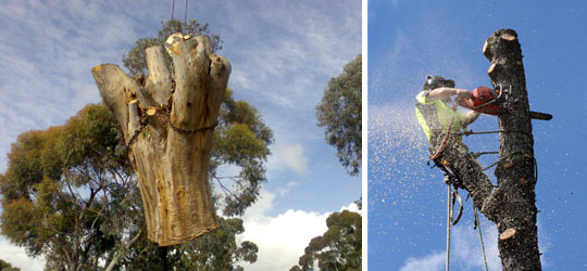 Lowering Large Section Tree Trunk - Chainsaw in action