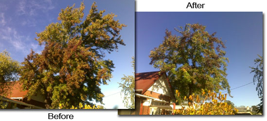 Re-balanced Tree After Pruning
